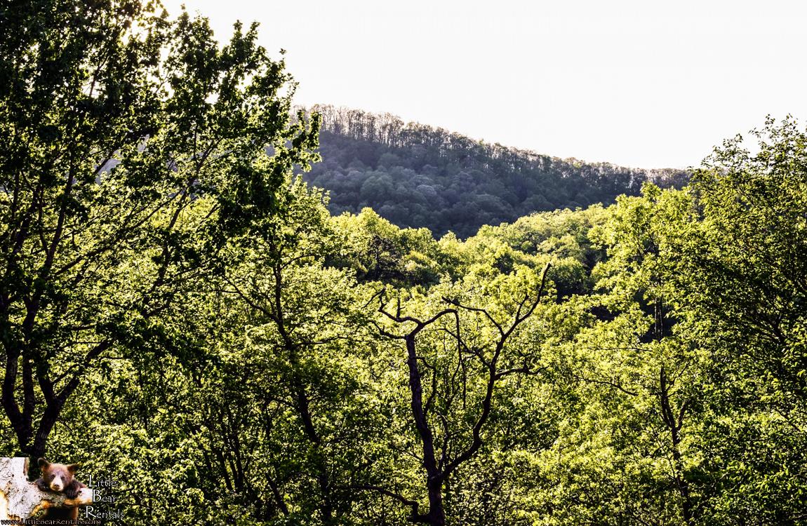 Antler Ridge - Hiawassee, GA